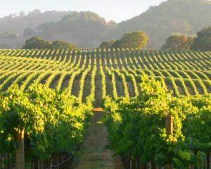 mendoza wines argentina 300x240 - mendoza-wines-argentina